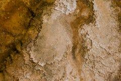Fondo orgánico del modelo de la textura Fotos de archivo