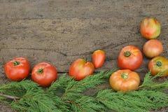 Fondo organicamente sviluppato dei pomodori Fotografia Stock