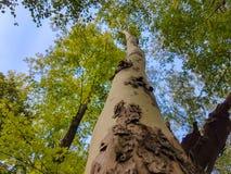 Fondo organico di struttura del primo piano naturale delle foglie verdi immagine stock libera da diritti