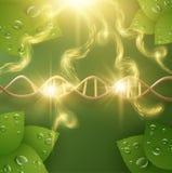 Fondo organico di vettore dei cosmetici di cura di pelle EPS10 Fotografie Stock Libere da Diritti