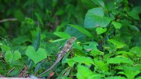 Fondo oriental del follaje del verde del lagarto del jardín almacen de video