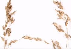 Fondo ornamental de la hierba Imagen de archivo