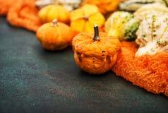 Fondo oscuro Autumn Harvest Thanksgiving de la calabaza Imagen de archivo libre de regalías