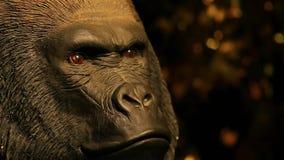 Fondo oscuro de la cabeza del gorila almacen de metraje de vídeo