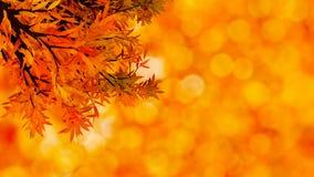 Fondo otoñal colorido con las hojas Imágenes de archivo libres de regalías