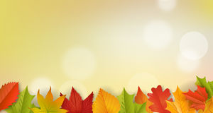 Fondo - otoño - hojas - follaje imagen de archivo