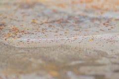 Fondo oxidado abstracto de la textura del metal, foco selectivo foto de archivo libre de regalías