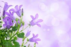 Fondo púrpura de la flor fotografía de archivo