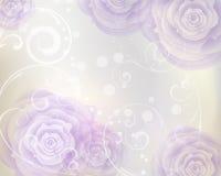 Fondo púrpura de las rosas Fotos de archivo libres de regalías