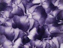 Fondo púrpura del vintage floral Un ramo de flores de la turquesa Primer collage floral Composici?n de la flor imágenes de archivo libres de regalías