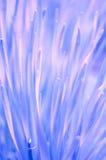 Fondo púrpura orgánico magnífico Foto de archivo libre de regalías