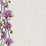 Fondo pallido con i fiori, i gambi ed i germogli porpora dell'orchidea Fotografie Stock