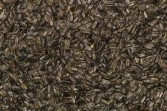 Fondo/papel pintado de las semillas de girasol Imagen de archivo libre de regalías
