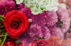 Fondo/papel pintado hermosos de la flor hecho con los filtros de color Foto de archivo