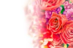 Fondo/papel pintado hermosos de la flor hecho con los filtros de color Imagenes de archivo