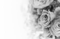 Fondo/papel pintado hermosos de la flor hecho con los filtros de color Imágenes de archivo libres de regalías