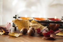 Fondo para el humor del otoño con las hojas de otoño y las bellotas del roble rojo septentrional Foto de archivo libre de regalías
