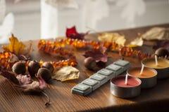 Fondo para el humor del otoño con las hojas de otoño y las bellotas del roble rojo septentrional y del collar ambarino Foto de archivo libre de regalías