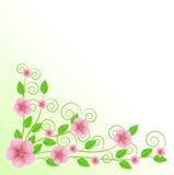 Fondo para un diseño con las flores rosadas Fotografía de archivo libre de regalías