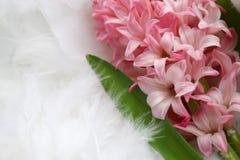 Fondo para una tarjeta de felicitación: flor rosada en el plumaje imagen de archivo