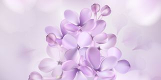 Fondo pastello con i fiori lilla Immagine Stock