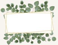 Fondo per testo dall'eucalyptus eucalyptus grigio e verde I Fotografie Stock Libere da Diritti