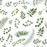 Fondo per testo dall'eucalyptus eucalyptus grigio e verde I Fotografia Stock
