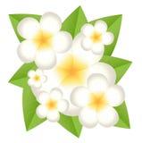 Fondo per una progettazione con i bei fiori Immagini Stock Libere da Diritti