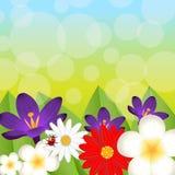 Fondo per una progettazione con i bei fiori Immagini Stock