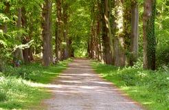 Fondo più forrest verde di legni con la strada del percorso di camminata di prospettiva Immagine Stock