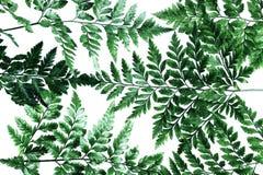 Fondo piano delle foglie di palma di vista superiore di disposizione Immagini Stock