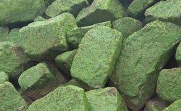 Fondo - pietre coperte dall'erba del mare verde Immagini Stock Libere da Diritti