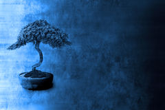 Fondo pintado de los bonsais Imagen de archivo