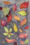 Fondo pintado a mano de la acuarela Foto de archivo