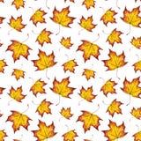 Fondo pintado a mano del otoño de la acuarela del arce de la hoja que cae Fotografía de archivo libre de regalías