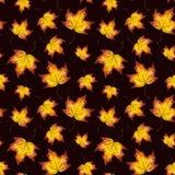 Fondo pintado a mano del otoño del watercolour del arce de la hoja que cae Fotografía de archivo libre de regalías