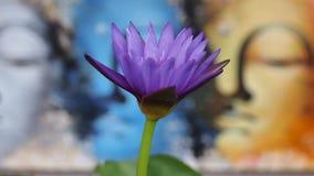 Fondo porpora di bouda e del fiore stock footage