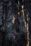 Fondo, primo piano di legno bruciato Albero carbonizzato, struttura di legno bruciata Immagine Stock Libera da Diritti