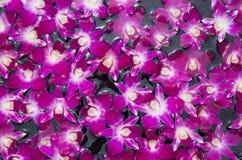 Fondo púrpura floreciente del estampado de plores de la orquídea Fotos de archivo