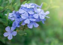 Fondo purpúreo claro de la flor Fotografía de archivo libre de regalías