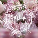 Fondo quadrato della primavera Fotografia Stock Libera da Diritti