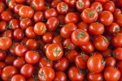 Fondo qualitativo dai pomodori Pomodori freschi Pomodori rossi Pomodori organici del mercato del villaggio Fotografia Stock