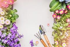 Fondo que cultiva un huerto con las diversas flores y herramientas del jardín en la visión concreta, superior gris Fotografía de archivo