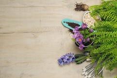 Fondo que cultiva un huerto de la primavera imagenes de archivo