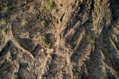 Fondo, radici dell'albero su terra immagine stock