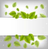 Fondo realista de las hojas Imagen de archivo