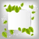 Fondo realista de las hojas Imagen de archivo libre de regalías