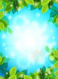 Fondo realistico della primavera luminosa, cielo blu, foglie verdi I raggi del sole, abbagliamento, incandescenza Modello per il  Immagini Stock Libere da Diritti