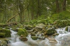 """Fondo relajante del río del †salvaje de la naturaleza """" Fotos de archivo"""
