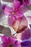 Fondo retroiluminado de las flores Fotos de archivo